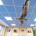 decor-plafond-dalle-acoustique # AK0311